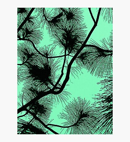 Desert flora, abstract pattern, floral design, black and light green Photographic Print