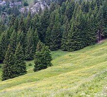 mountain landscape by spetenfia