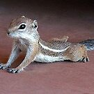 """Yoga Chipmunk"" by Susan Bergstrom"
