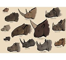 Rhinocertidae - extant rhinos and their relatives. Photographic Print