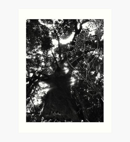 Cradle Mountain tree 1 Art Print