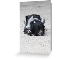 dog in the street Greeting Card