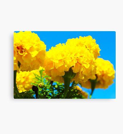 Yellow Flowers in Garden Canvas Print