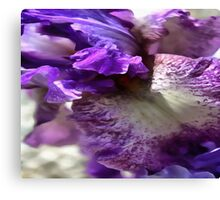 Purple, Violet and Mauve Iris Abstract Canvas Print