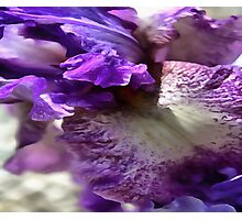 Purple, Violet and Mauve Iris Abstract Photographic Print