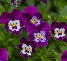 violet by spetenfia