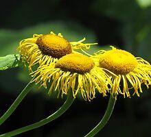 Summer blooms by Alberto  DeJesus