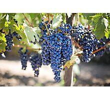 Purple Grapes Photographic Print