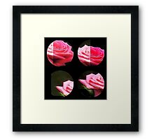 Pink Roses in Anzures 3 Art Circles 3 Framed Print