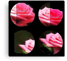 Pink Roses in Anzures 3 Art Circles 3 Canvas Print