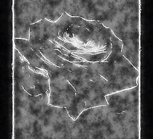 Pink Roses in Anzures 3 Outlined Black by Christopher Johnson
