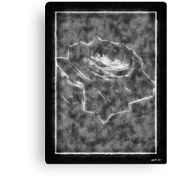 Pink Roses in Anzures 3 Outlined Black Canvas Print