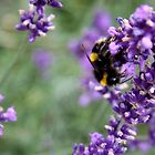 Summer Bumble Bee 2 by Vanessa  Warren