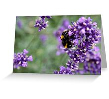 Summer Bumble Bee 2 Greeting Card