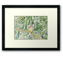 Cedar Waxwing, Finger Lakes, New York Framed Print