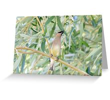 Cedar Waxwing, Finger Lakes, New York Greeting Card