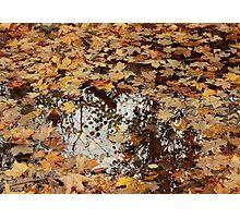 Fall, Finger Lakes, New York Photographic Print