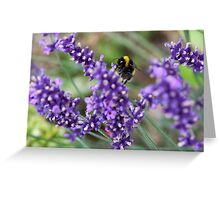 Summer Bumble Bee 1 Greeting Card