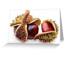 Display of Conkers Greeting Card