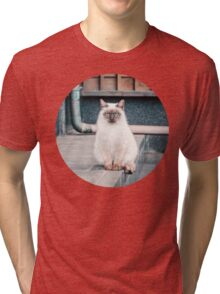 Cat, Aso, Temple Tri-blend T-Shirt