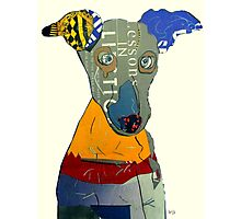 kacy the greyhound Photographic Print