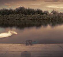 The Swan by maratshdey