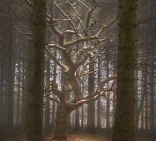 Singular Tree by maratshdey