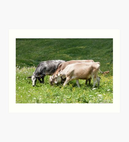 cows in the meadow Art Print