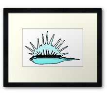 Spikey Sea Shell Framed Print