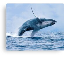 Breaching Humpback Whale Canvas Print