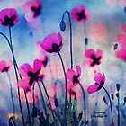 Misty Poppies by Bunny Clarke