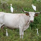 Bovine and Bird Buddies by Bonnie T.  Barry