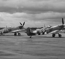 Supermarine Spitfires In Springtime by PathfinderMedia