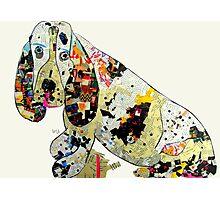 jazzberry hound  Photographic Print
