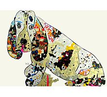 jazzberry hound  Photographic Print