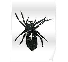 Grafic Spider Poster