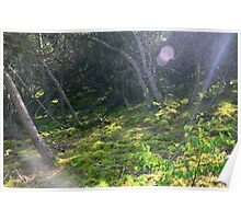 Sun Flares in a Forest Poster