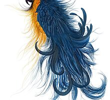Blue and Gold Macaw by sebabybaby