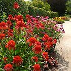 Down the garden path by MarianBendeth