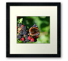 Butterfly on Wild Blackberries Framed Print