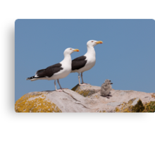 The Family Stands Proudly, Saltee Island, County Wexford, Ireland Canvas Print