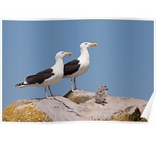 The Family Stands Proudly, Saltee Island, County Wexford, Ireland Poster