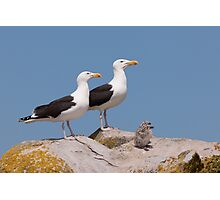 The Family Stands Proudly, Saltee Island, County Wexford, Ireland Photographic Print