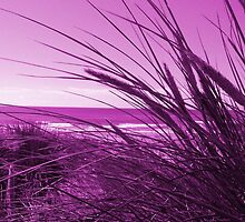 In The Reeds - Pink by simzzuk