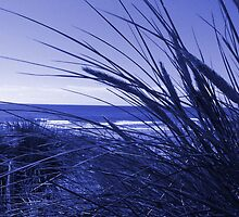 In The Reeds - Purple by simzzuk