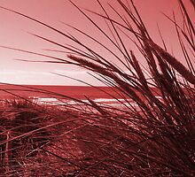 In The Reeds - Red by simzzuk