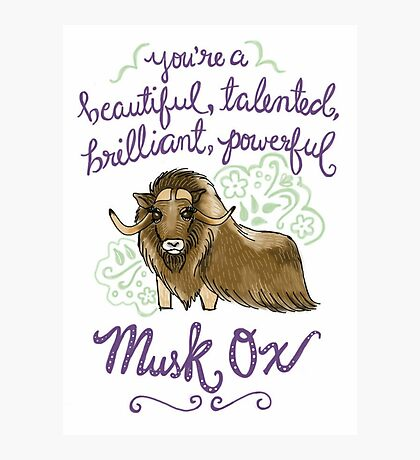 Beautiful musk ox Photographic Print