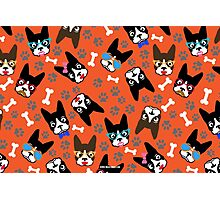 Boston Terrier Funny Faces Orange Photographic Print