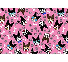 Boston Terrier Funny Faces Pink Photographic Print