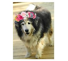 Leo from Old Friends Senior Dog Sanctuary Photographic Print